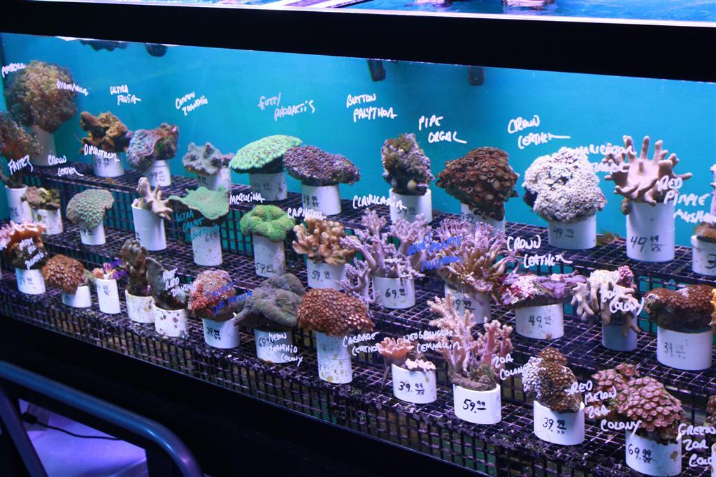 Coral Reef Aquariums