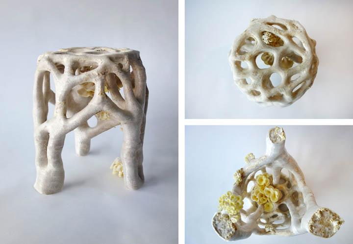 Veiled_Lady_Mycelium_Project_720_498.jpg