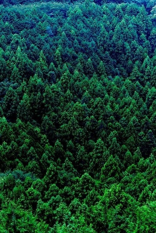 0ce4n-g0d :      Green Forest | Minoru Hohtsuki