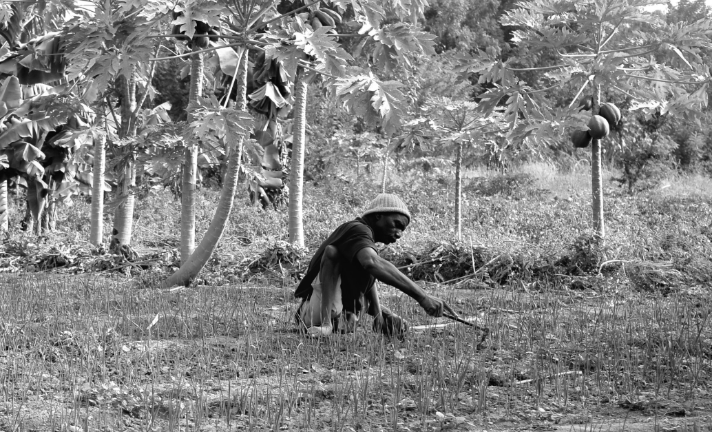 A man is centered in a field of tall trees and holds a small sharp tool to cut the grass. He wears a hat and sits on his rear end as he works. His two legs are withered from polio.