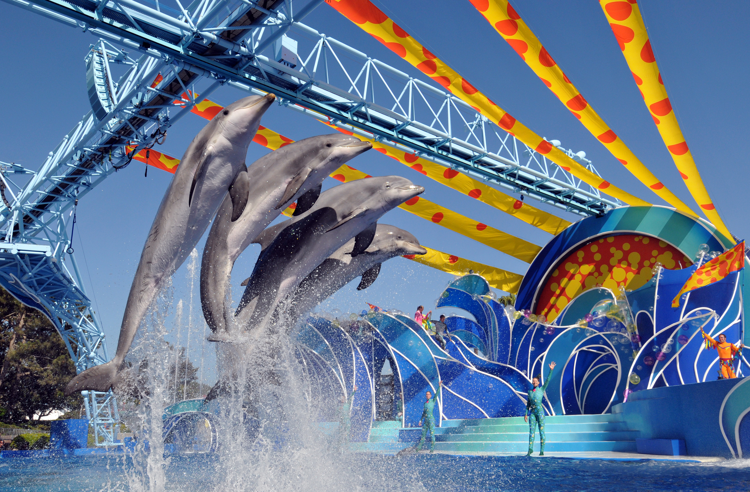 Dolphins_Show_-Courtesy_SeaWorld.png