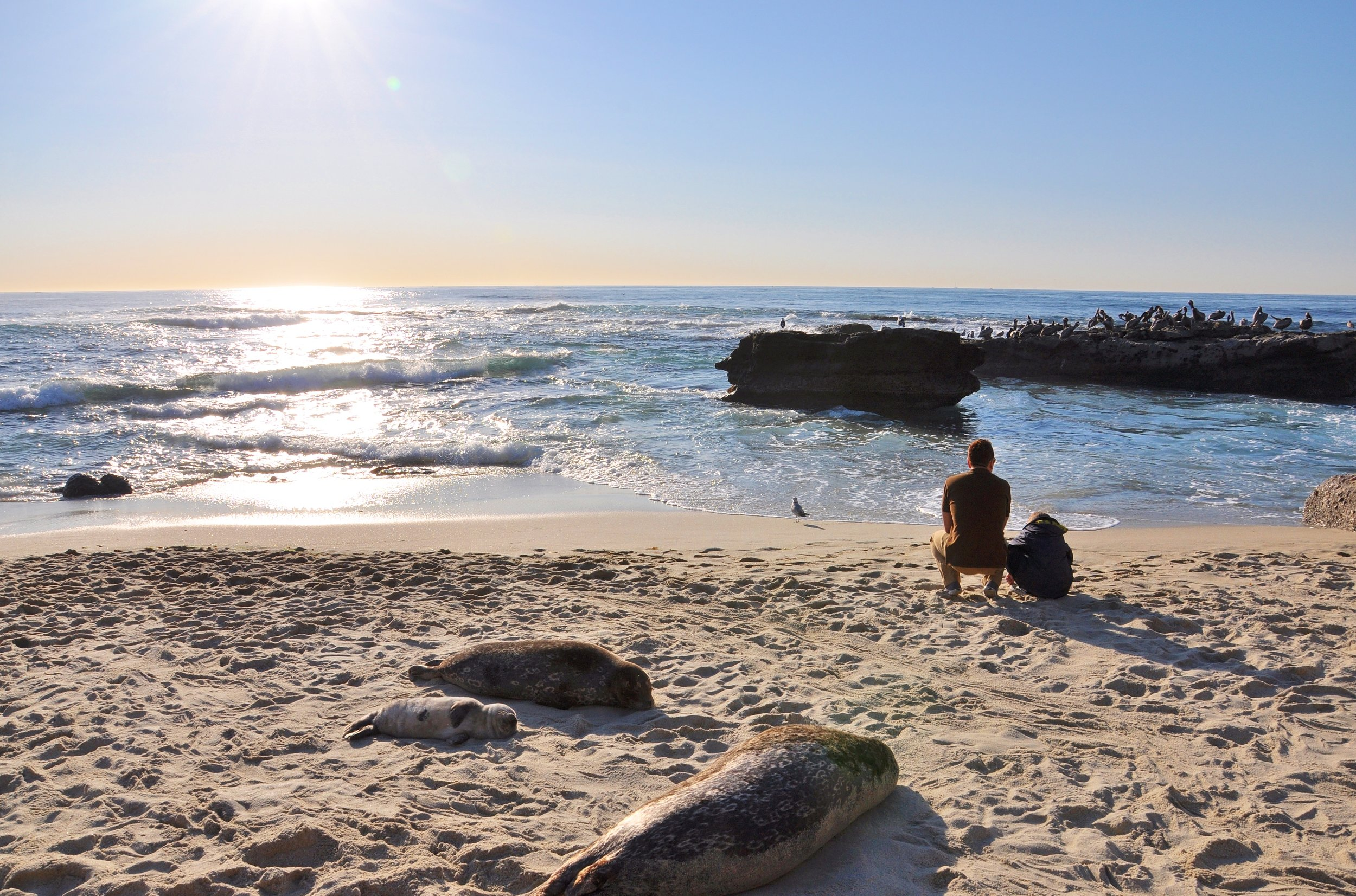 La_Jolla_Coves_Father_and_Son_-Courtesy_Lisa_Field_SanDiego.org.JPG