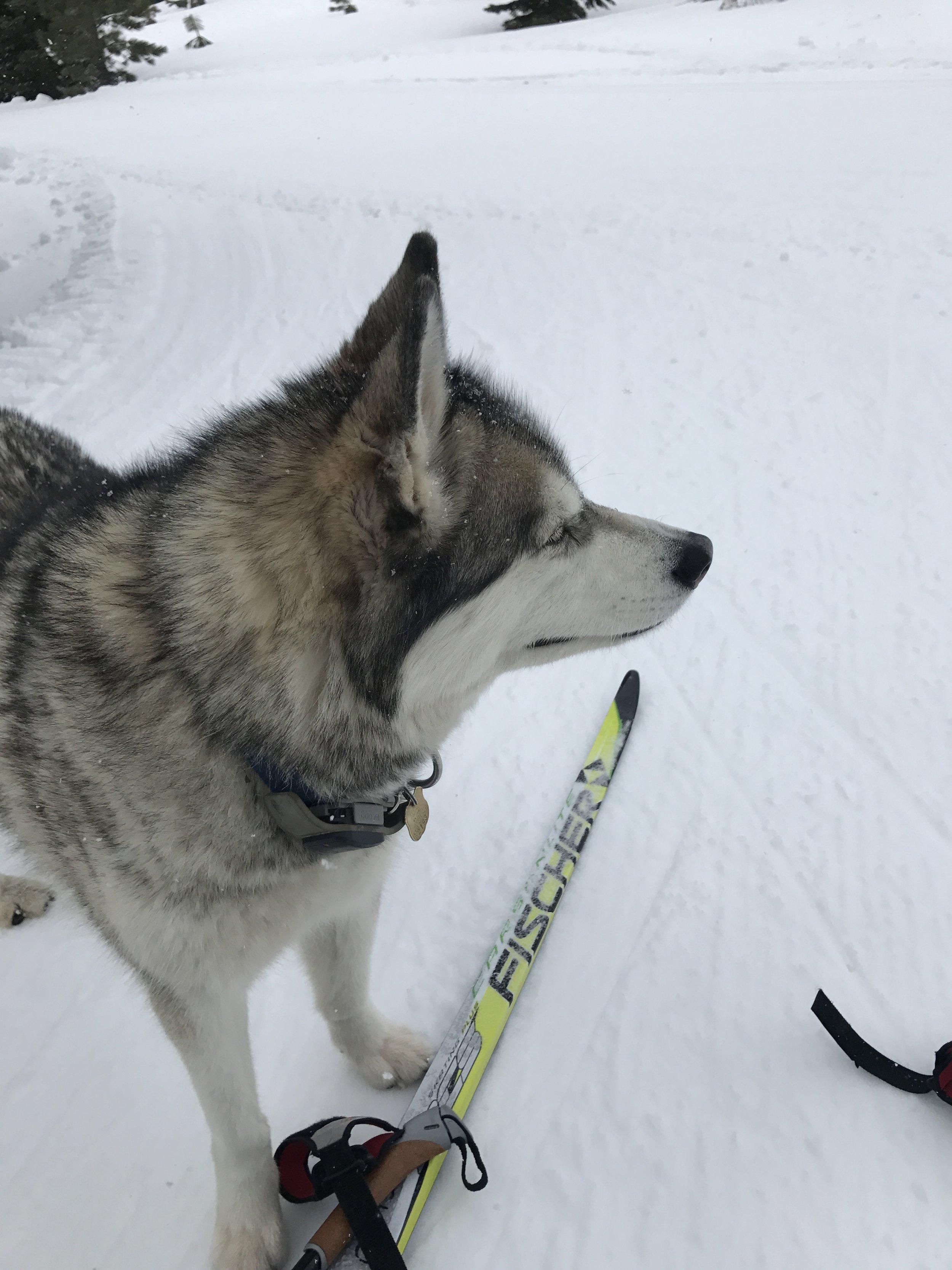Luna enjoyed ski season too!