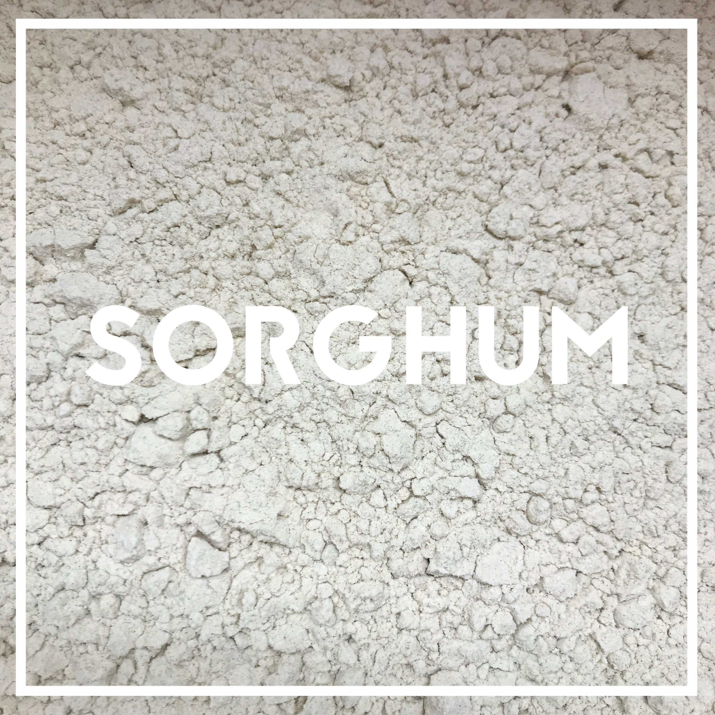 Our Sorghum is grown by family farmers within about 70 miles of Effingham, IL, where they are stone milled at  Hodgson Mill .   Used in: 1776   Sorghum (also called Shattercane, broomcorn, and Sudan grass) is an ancient grain, cultivated in Northeastern Africa for more than 10,000 years. In the United States, Benjamin Franklin gave seeds to his friends, because it made excellent bread and unparalleled thatching. We use it for its mild, silky sweetness.