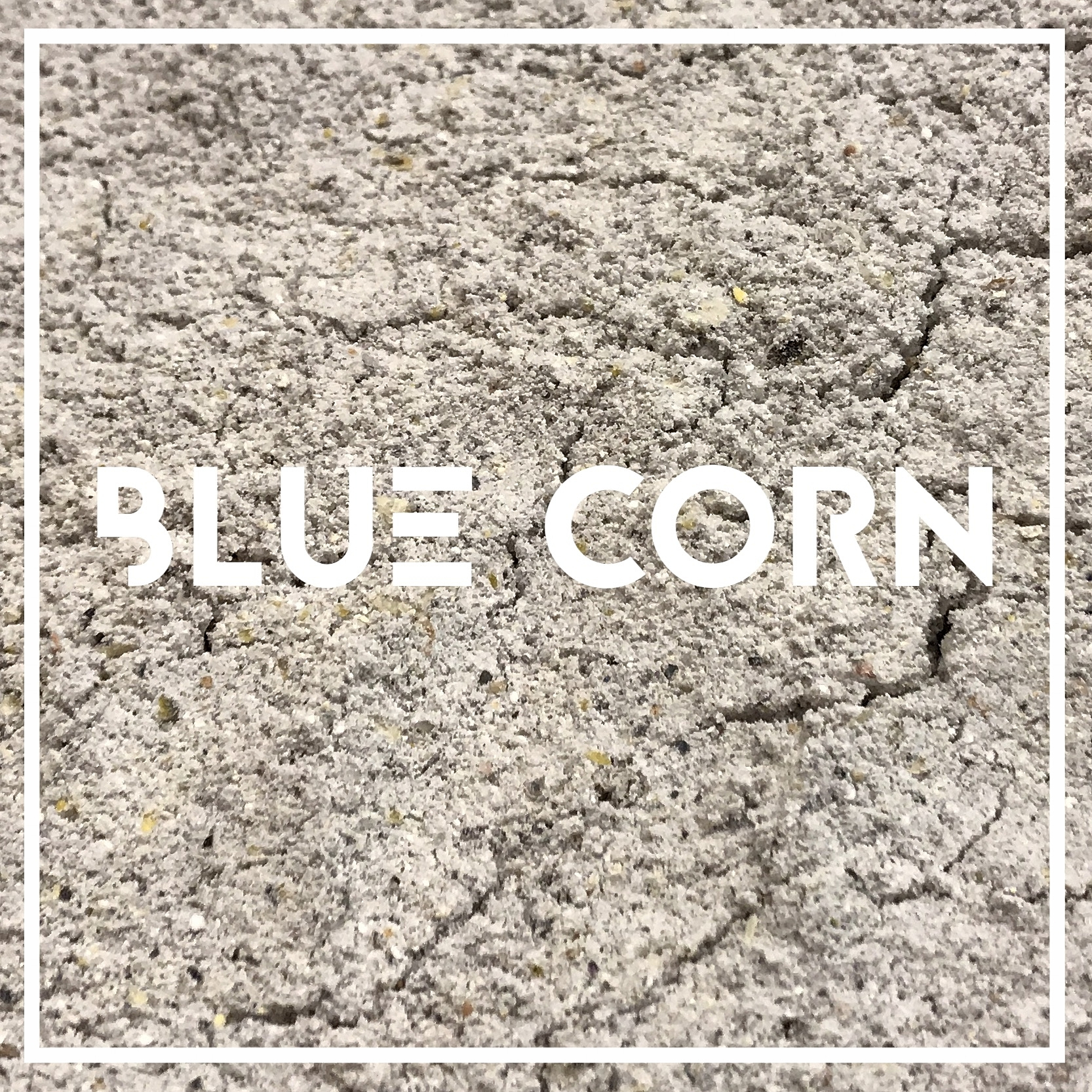 Our organic whole grain blue corn is grown by Dave Dolan in Dodgeville WI. It is milled at  Lonesome Stone Mill , in Lone Rock WI.   Used in: Windy Point, 1776   Blue Corn is one of America's most ancient grains. Long cultivated by the Hopi Indians in what is now Arizona and New Mexico, ours has been adapted to the midwest climate through careful seed-selection. Blue corn has a distinctively dry, mildly sweet flavor.