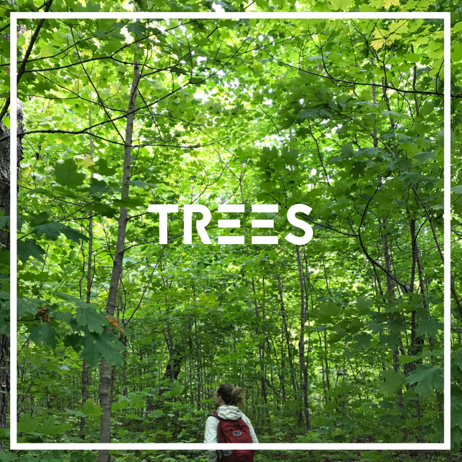 Trees give us so much more than maple syrup.