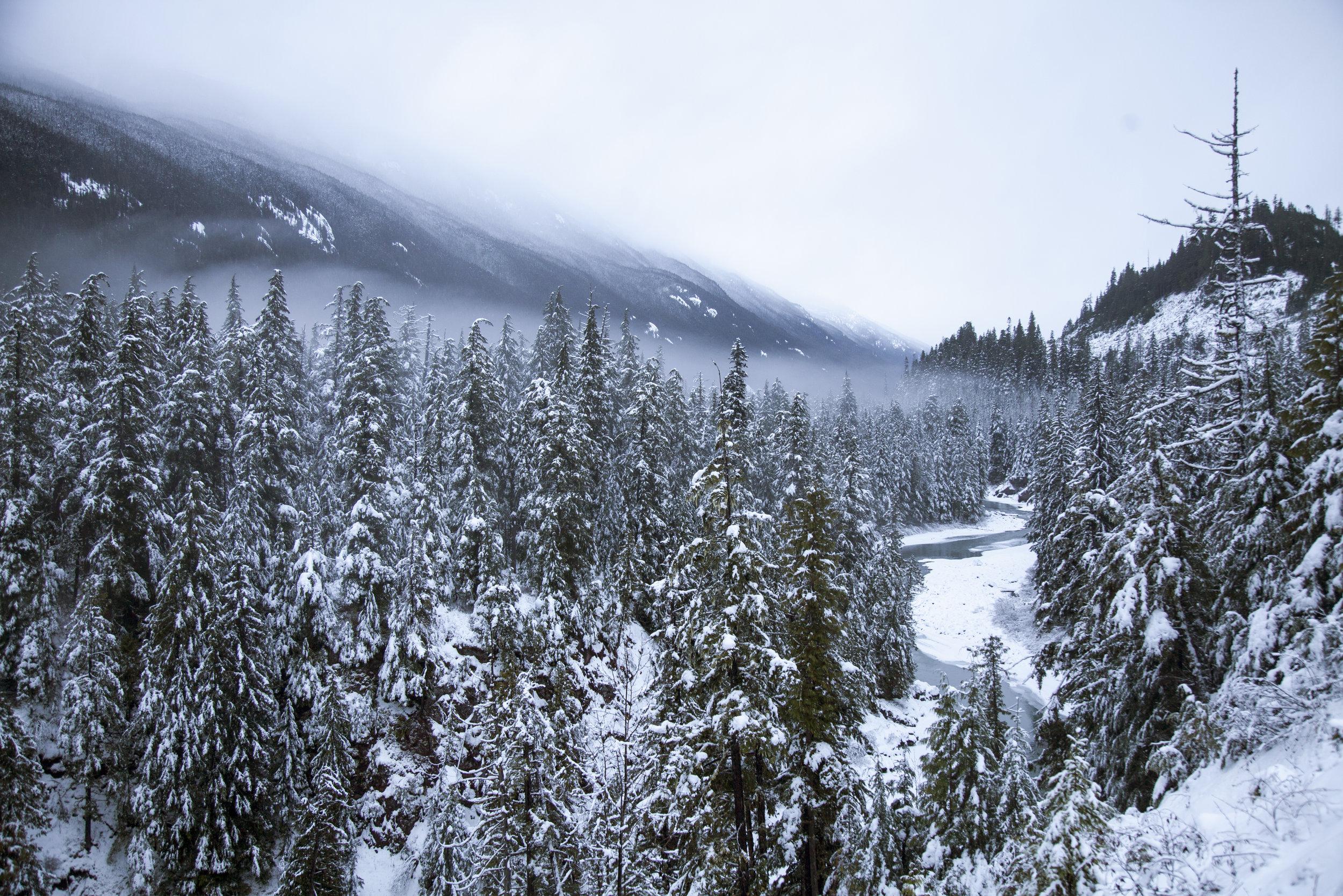Snowy Tree Tops.jpg