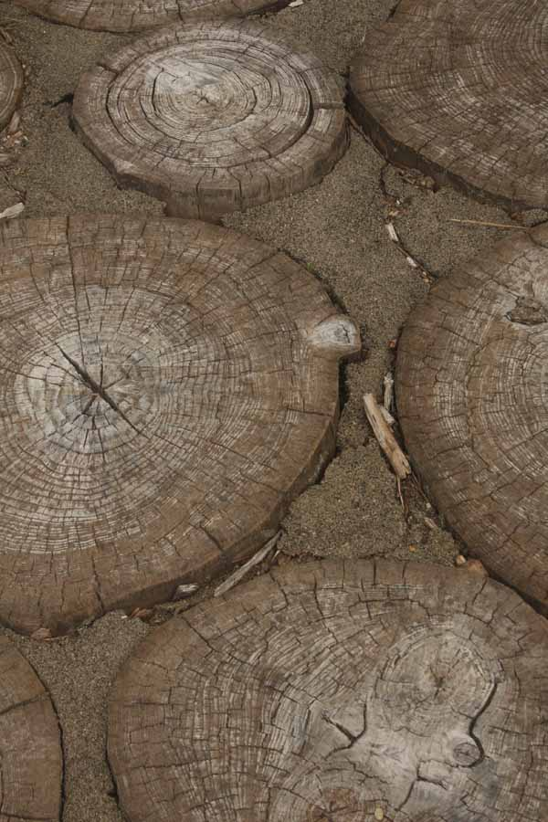 wood round closeup