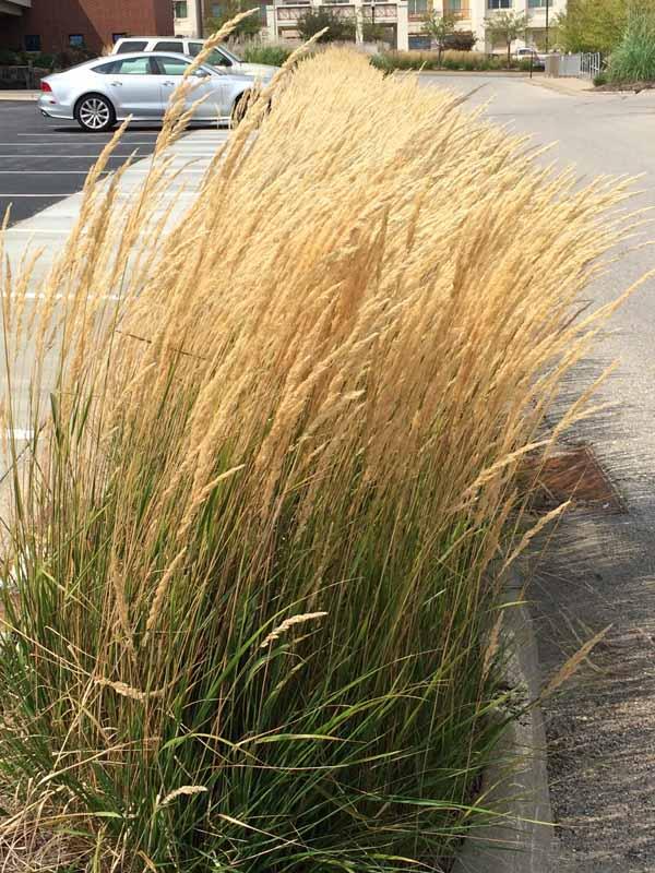 Grasses close