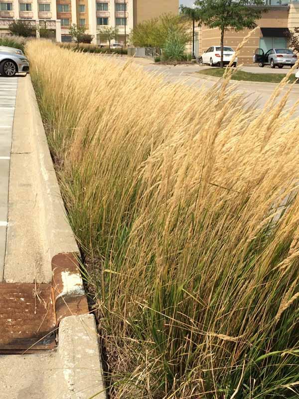 closer grasses