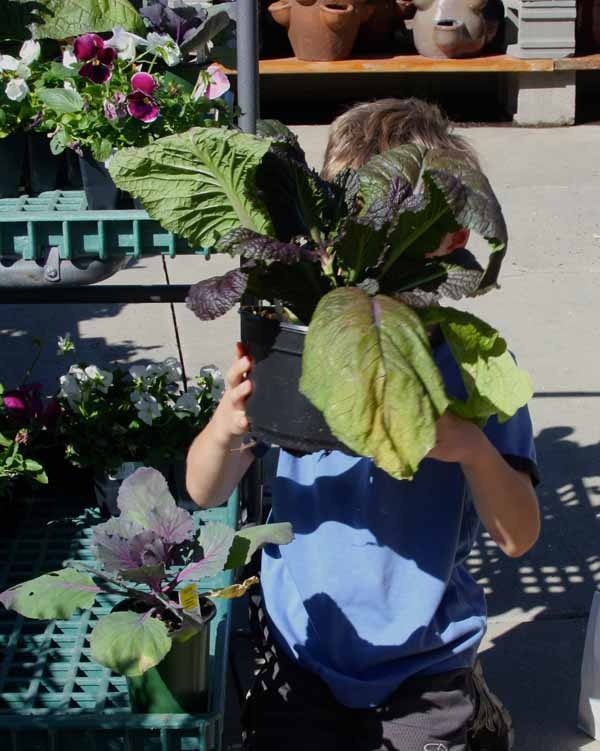 Little helpers with fall annuals