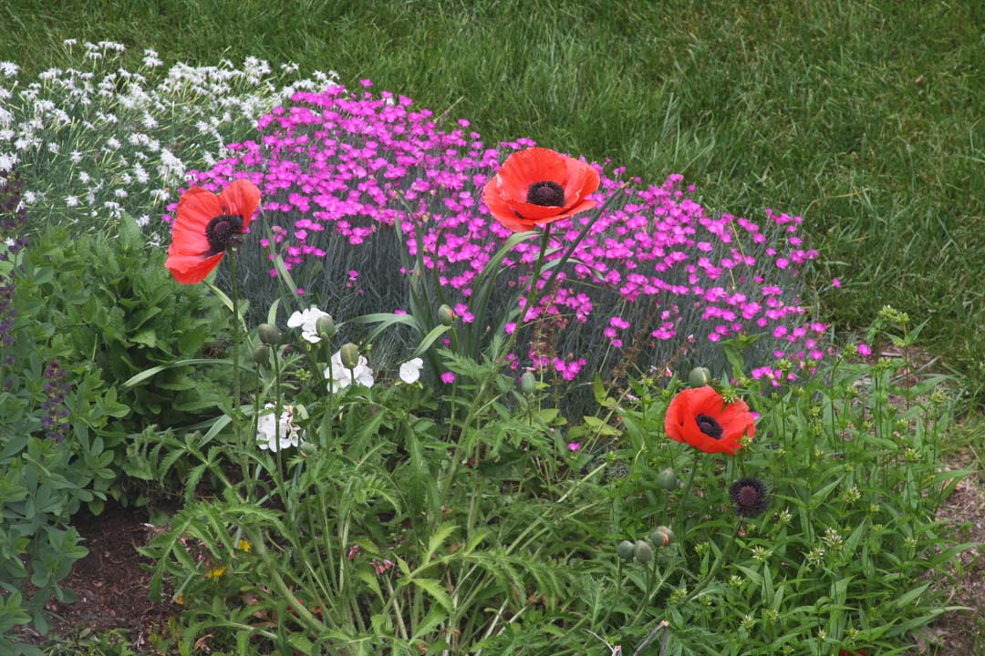 RFLD Colorful backyard web 4.jpg
