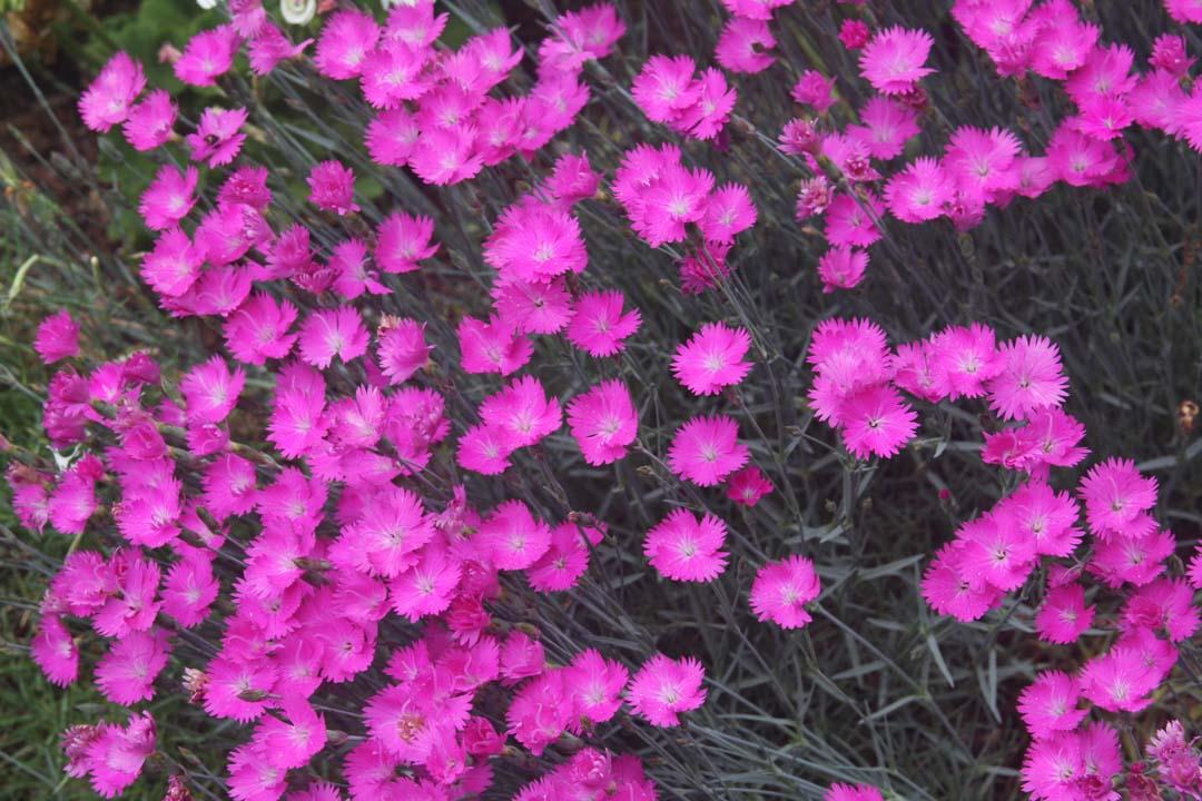RFLD Colorful backyard web 6.jpg