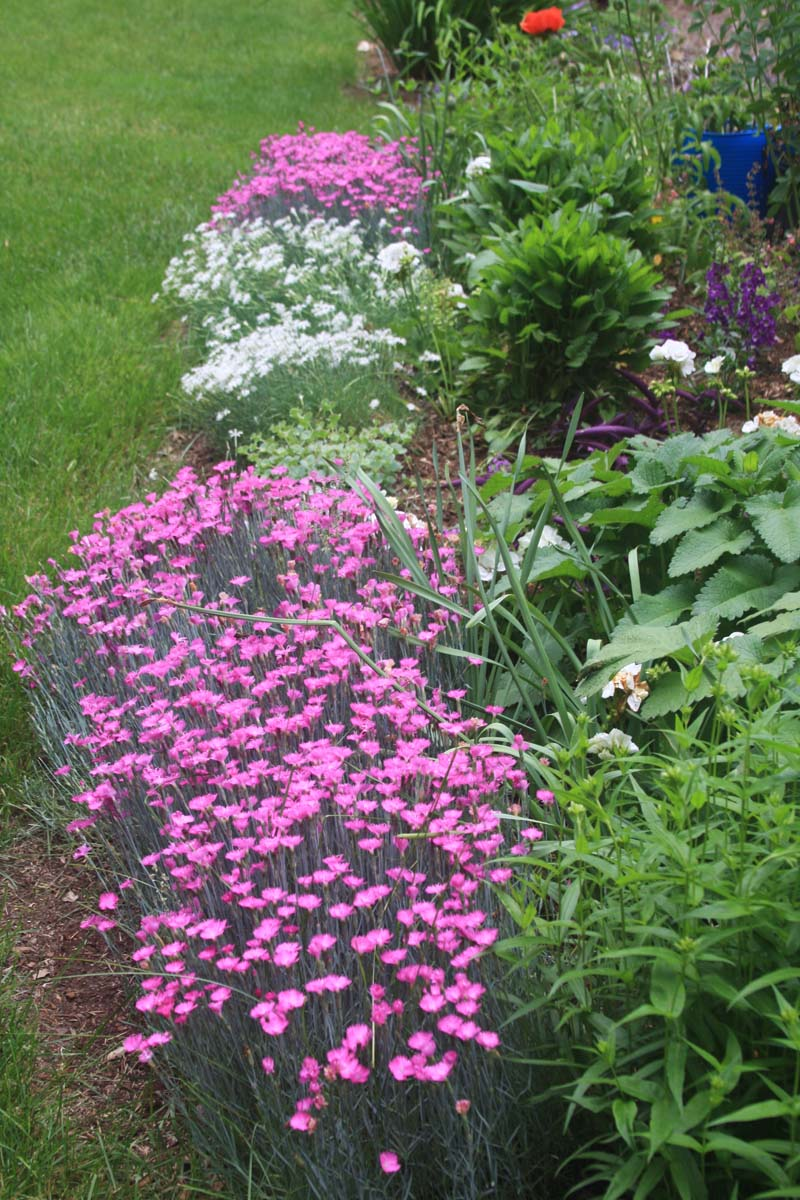 RFLD Colorful backyard web 15.jpg