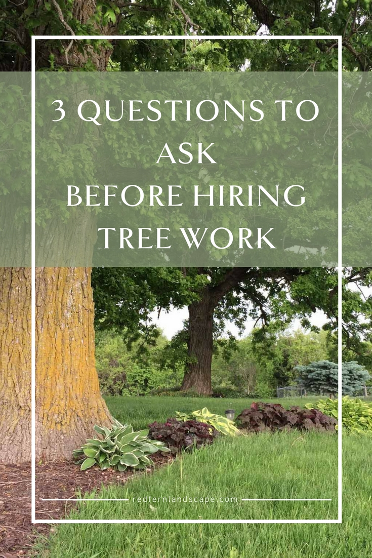 Red Fern Landscape Design | Tree Questions