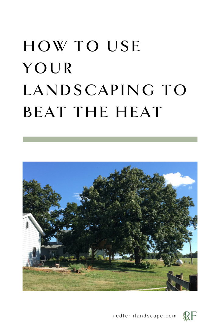 landscaping-energy-efficiency-cooling-shade-tree