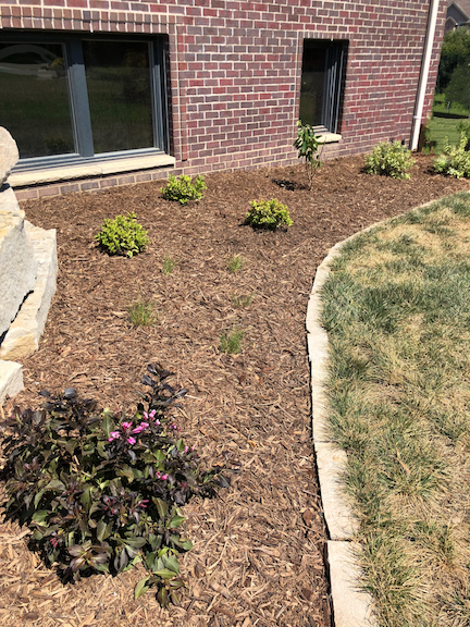 Ankeny-New-Construction-Landscaping-Plantings