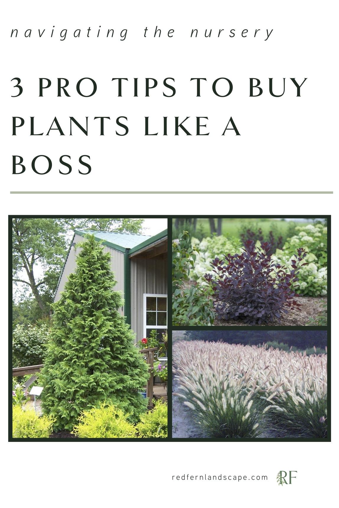 Red-Fern-landscape-design-des-moines-landscaping-landscape-designer-buying-plants