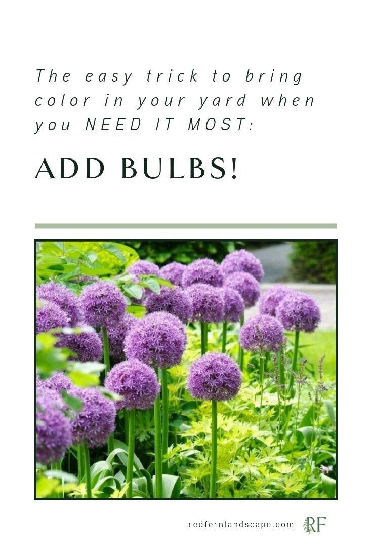 Red-Fern-Landscape-Design-Bulb-Planting-Iowa-Des Moines-Landscaping-Garden-Flowers