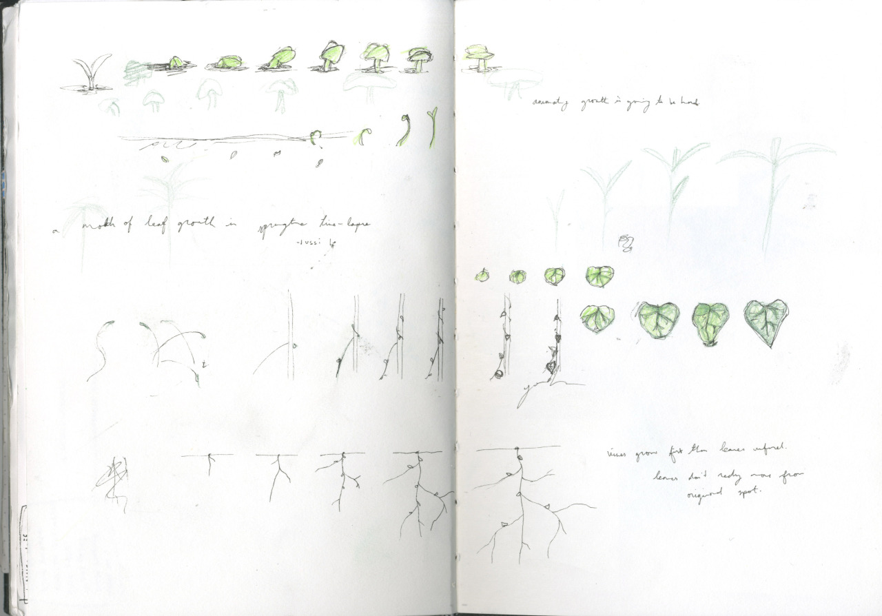 A study of plants growing.