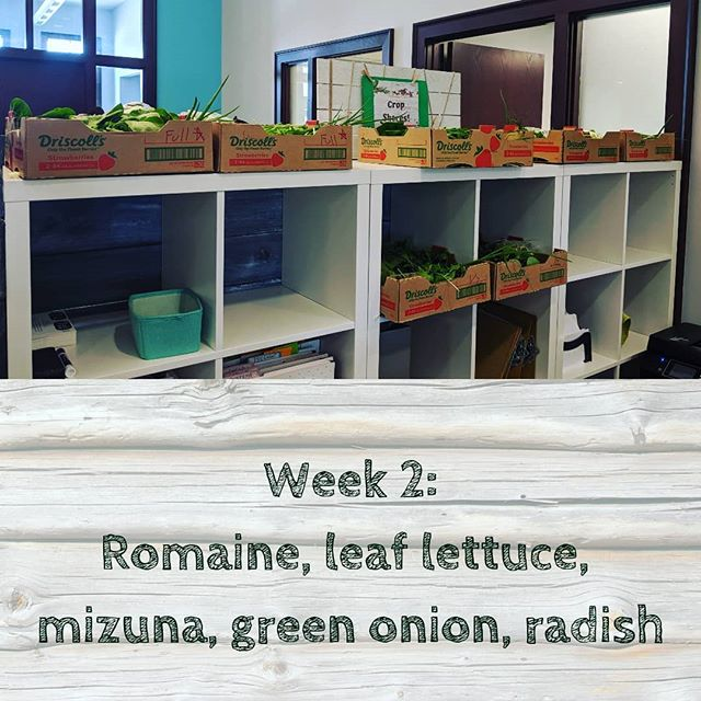 Our CSA week 2 delivery is here!! Pick up before 6pm today.  #thrivechirowellness #csa #schulerfarms #organic #eatlocal
