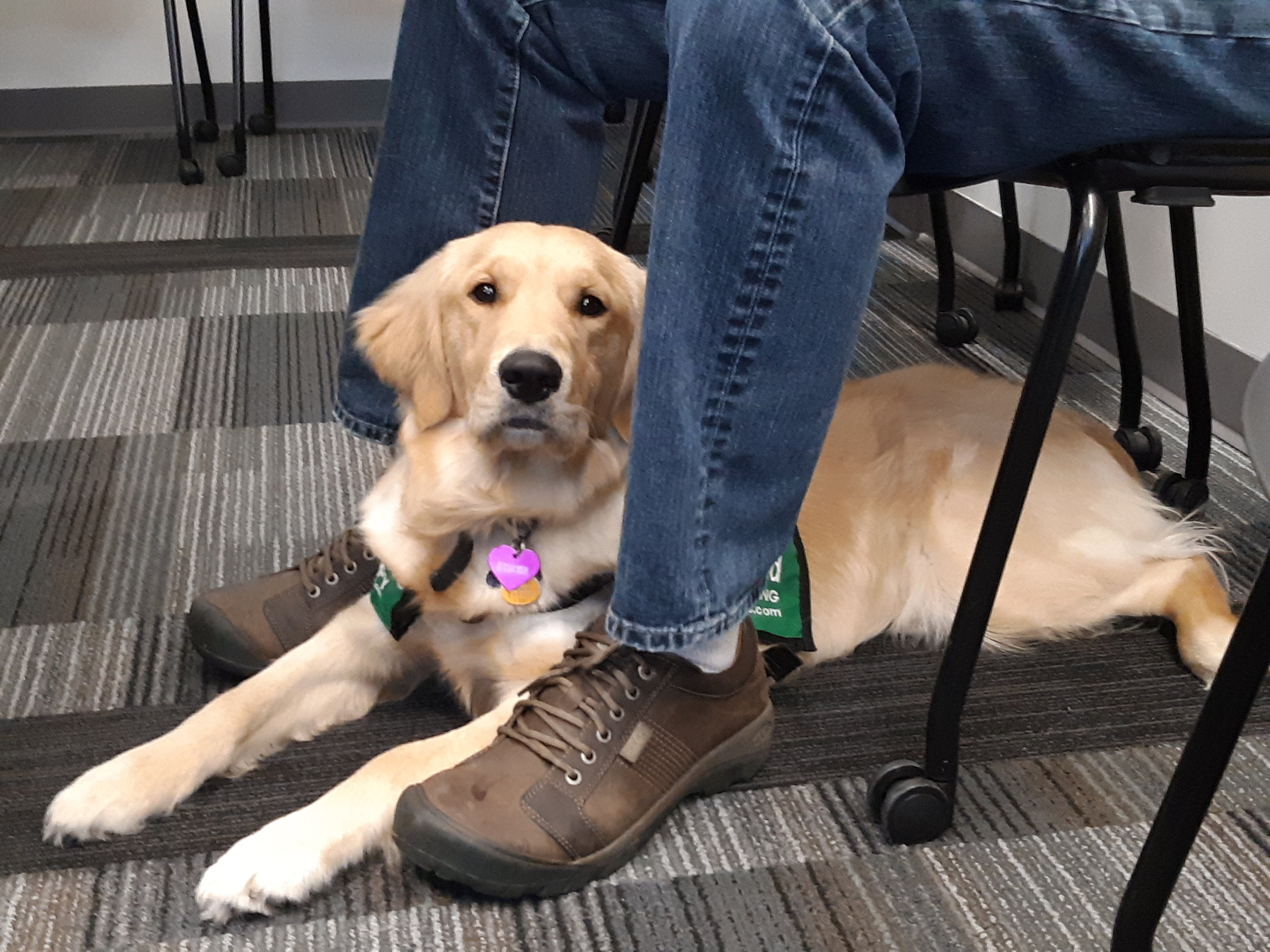 2019 02 28 - Norabelle's First Scheduling Meeting - Guide Dogs for the Blind.jpg