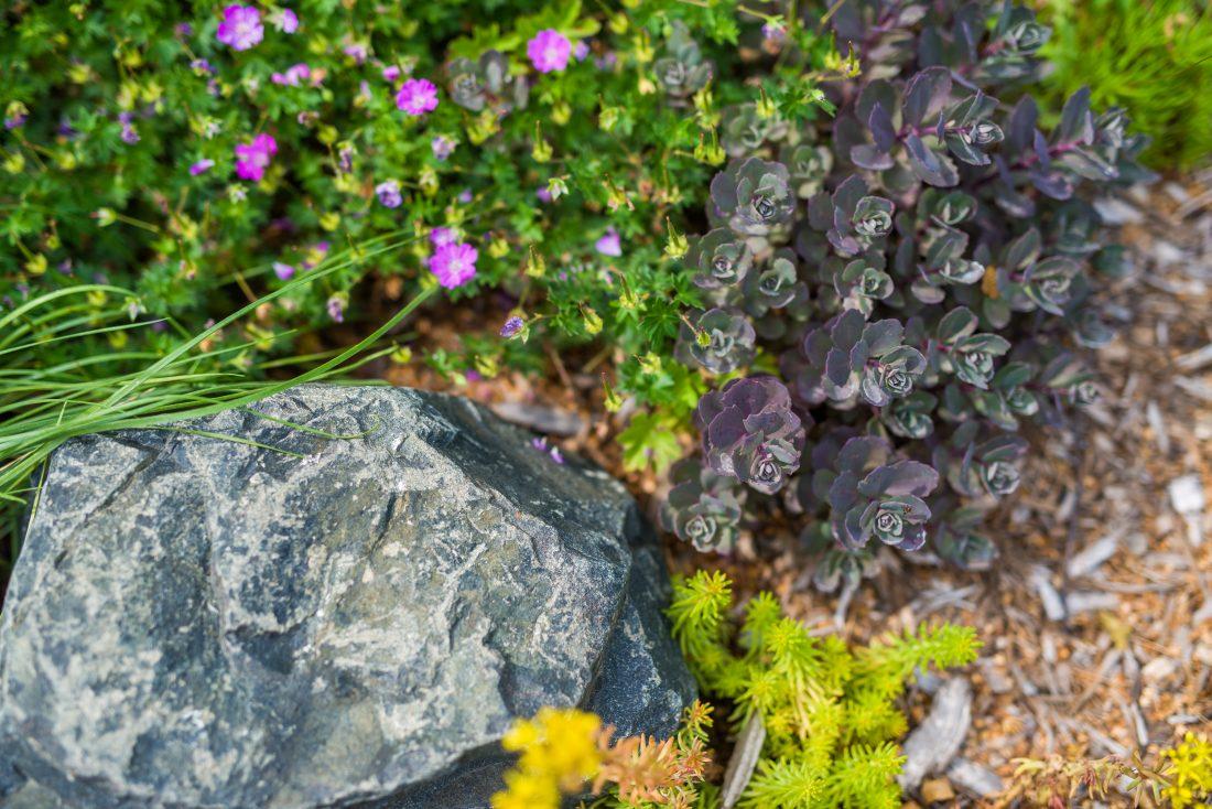 Sculptural-Water-Garden-12-sedums-closeup-1100x734.jpg