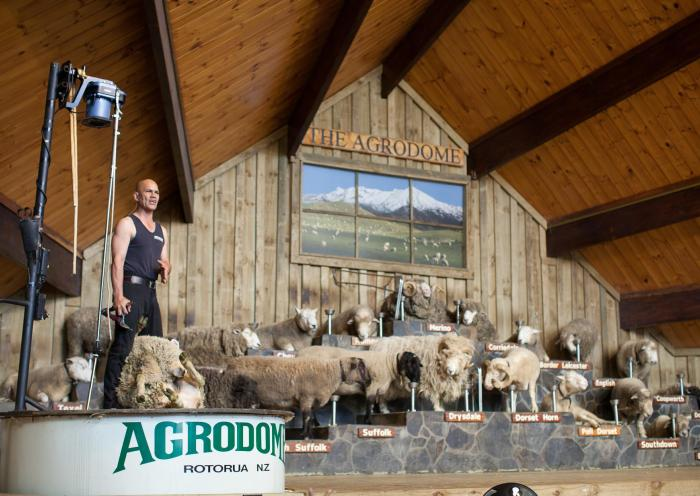 Le spectacle fermier © Agrodome
