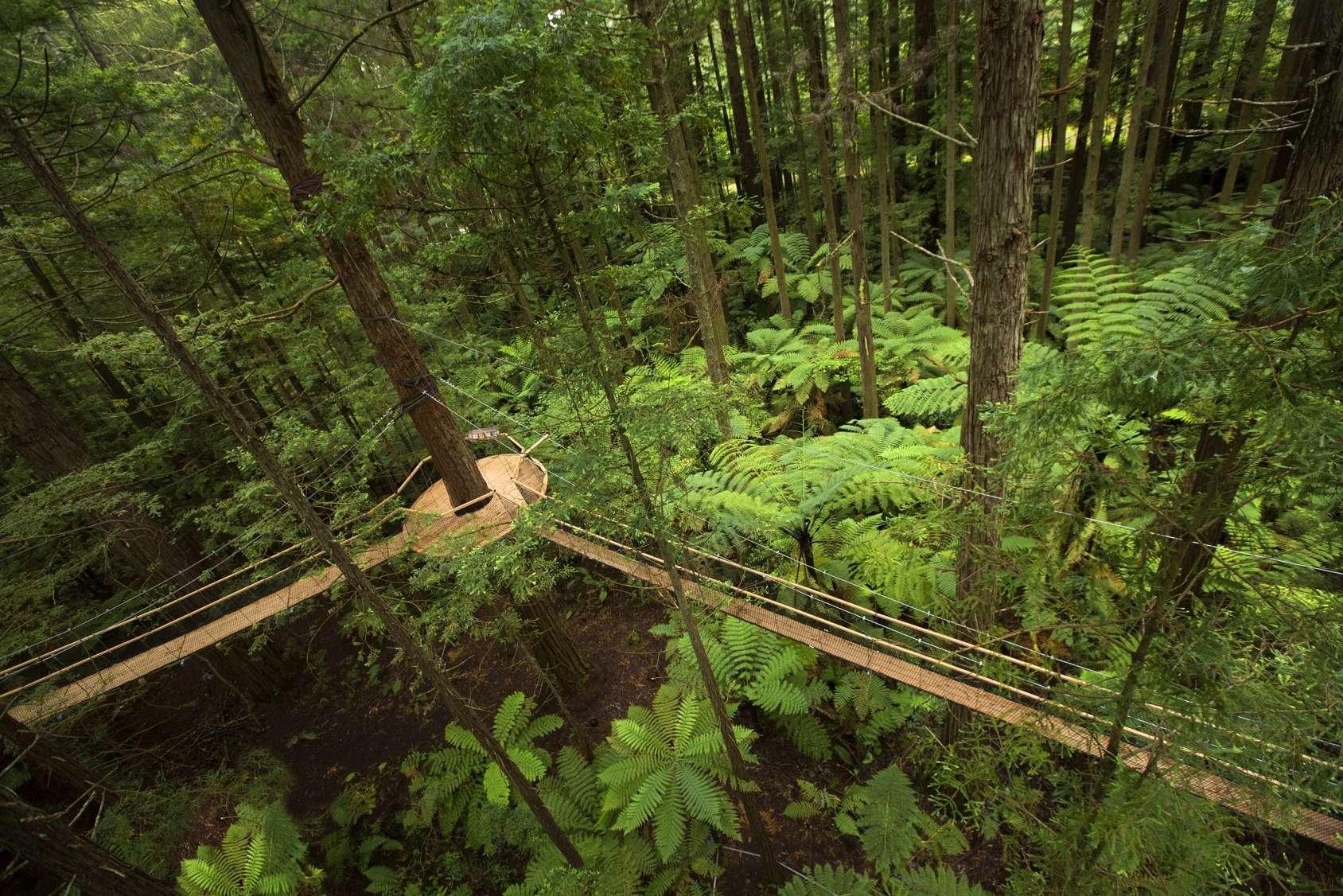 © Redwood Treewalk