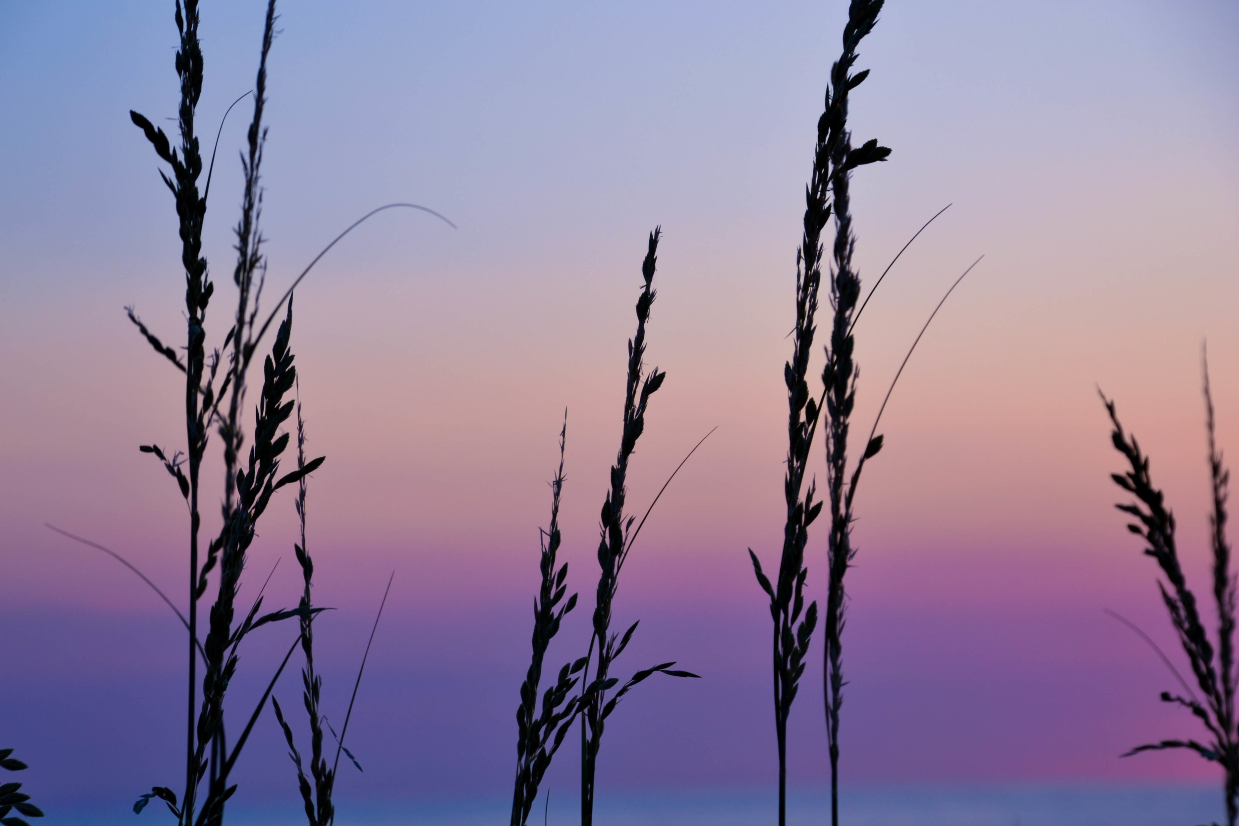 sunrise - obx-15.jpg