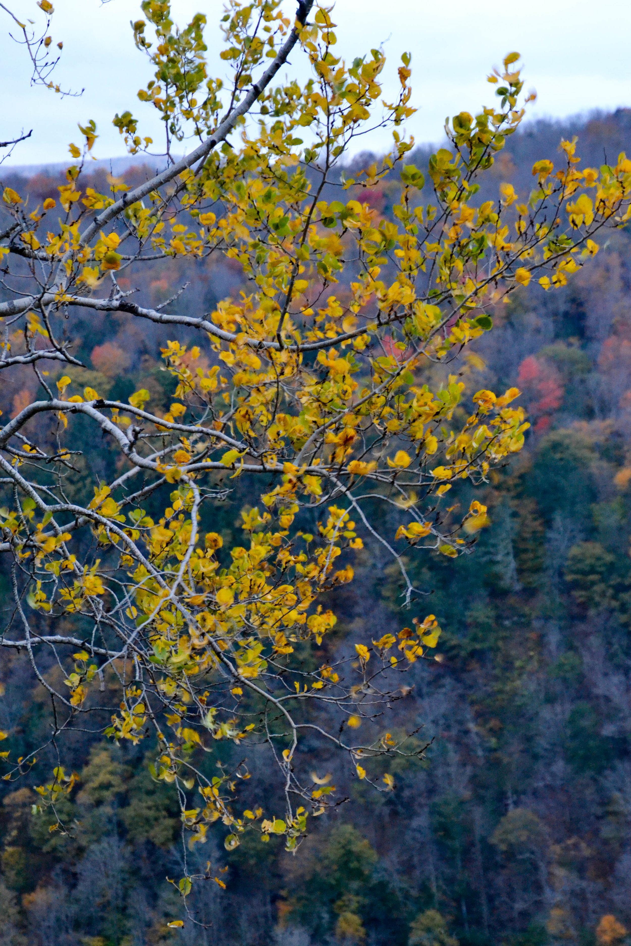 pine_creek-3.jpg