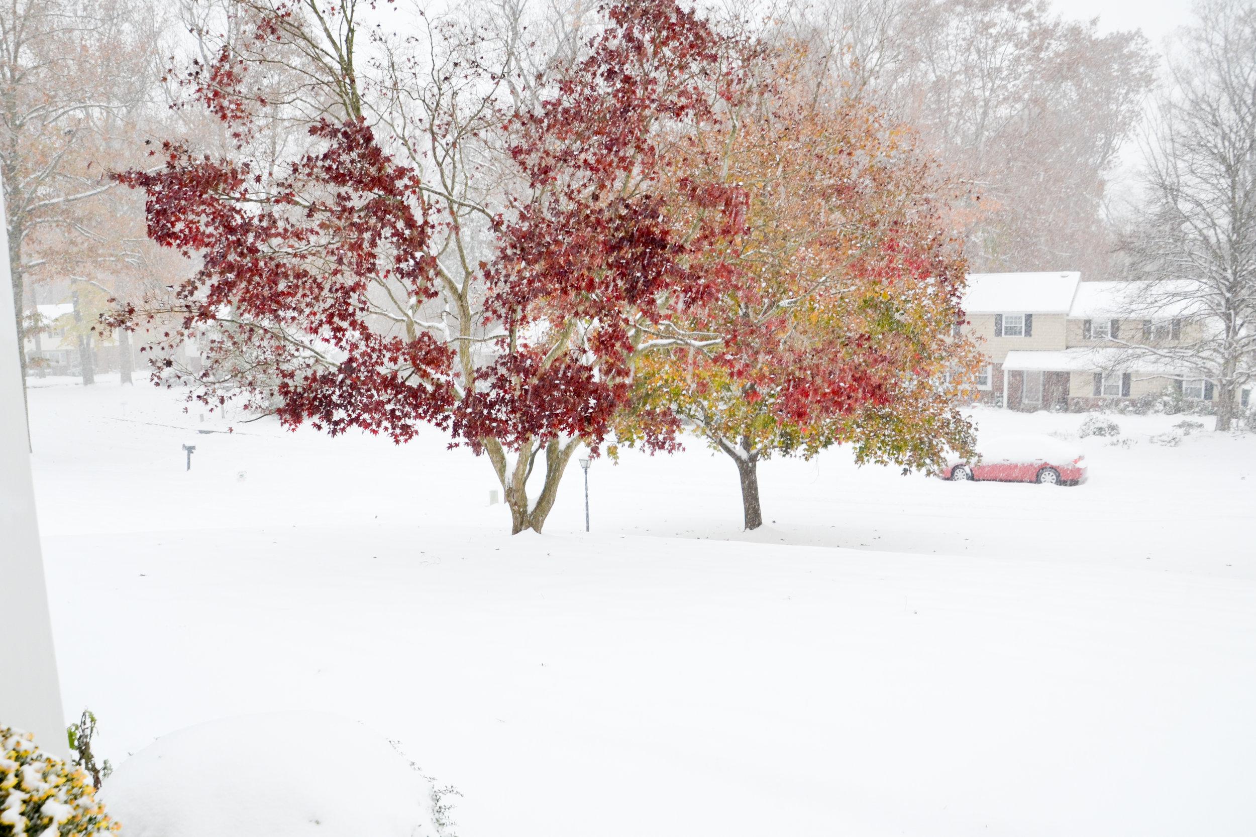 This week's snow!