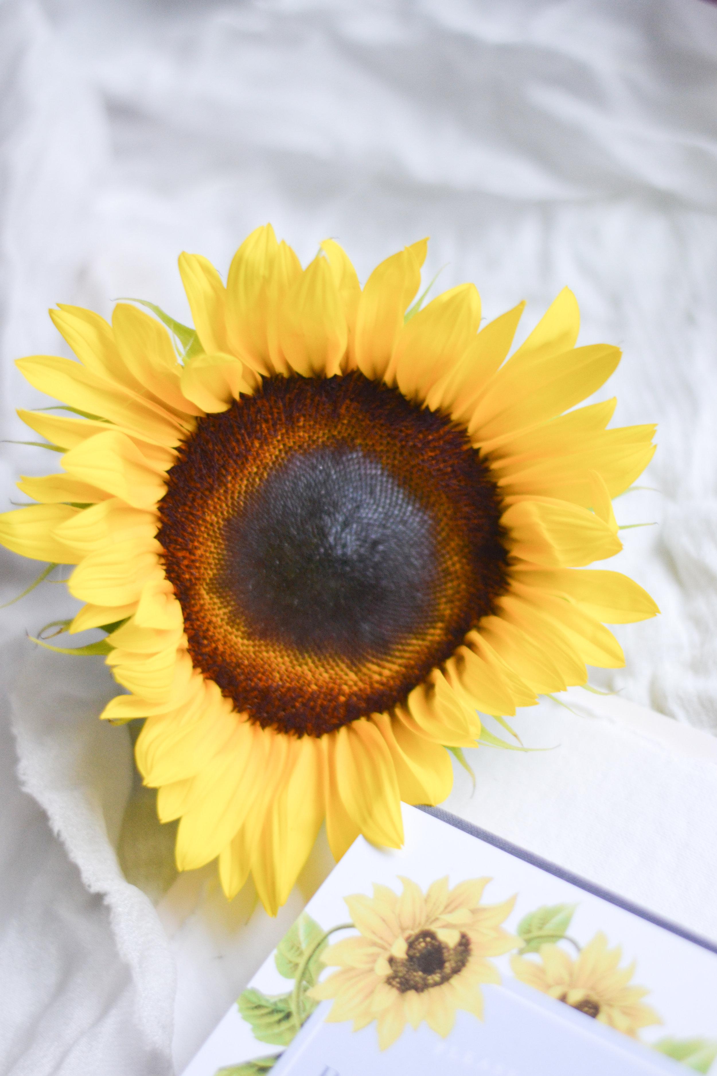 ATaylorStudio - Sunflower Bridal Shower Invites-18.jpg
