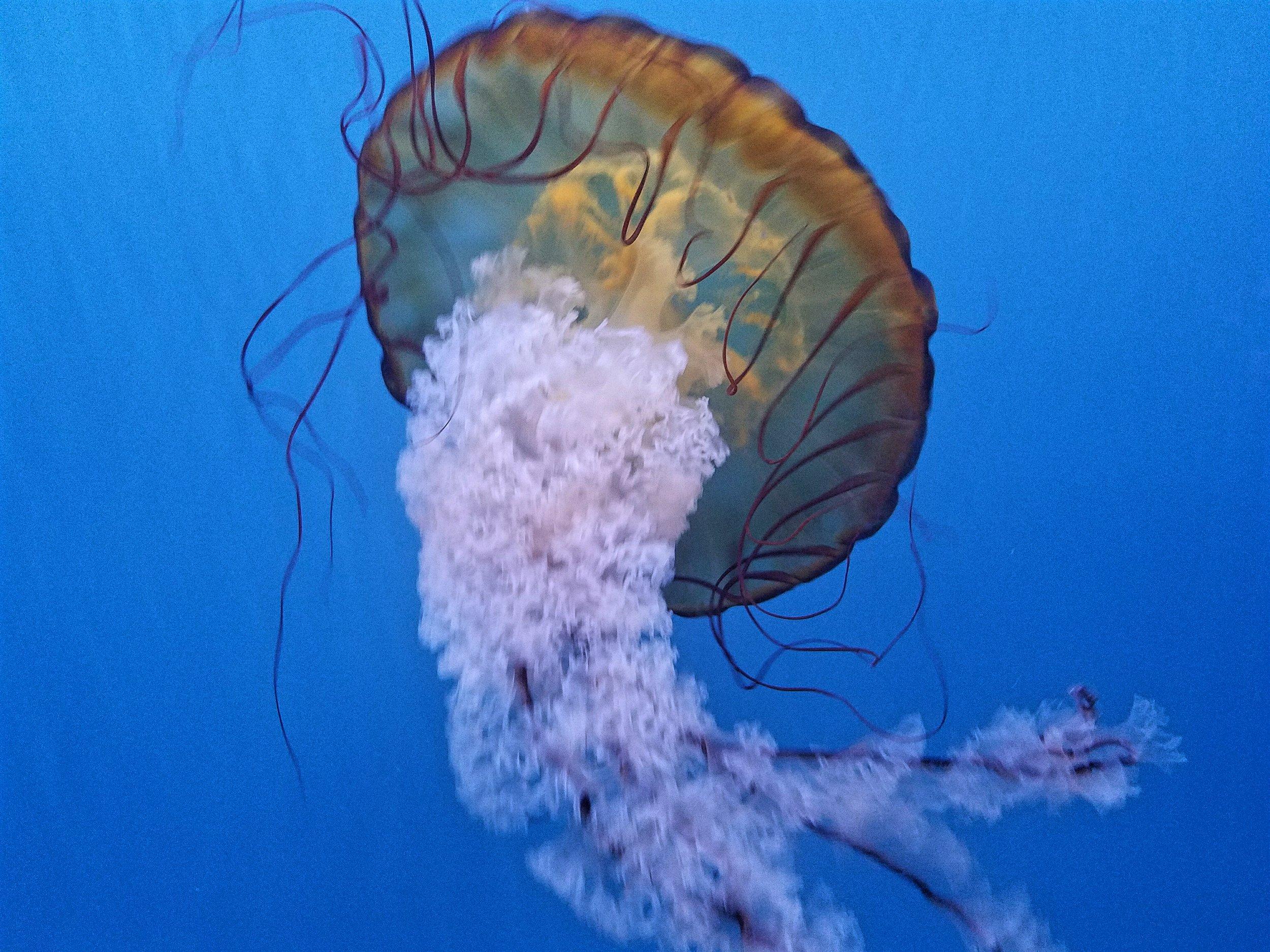 audubon-aquarium-jellyfish