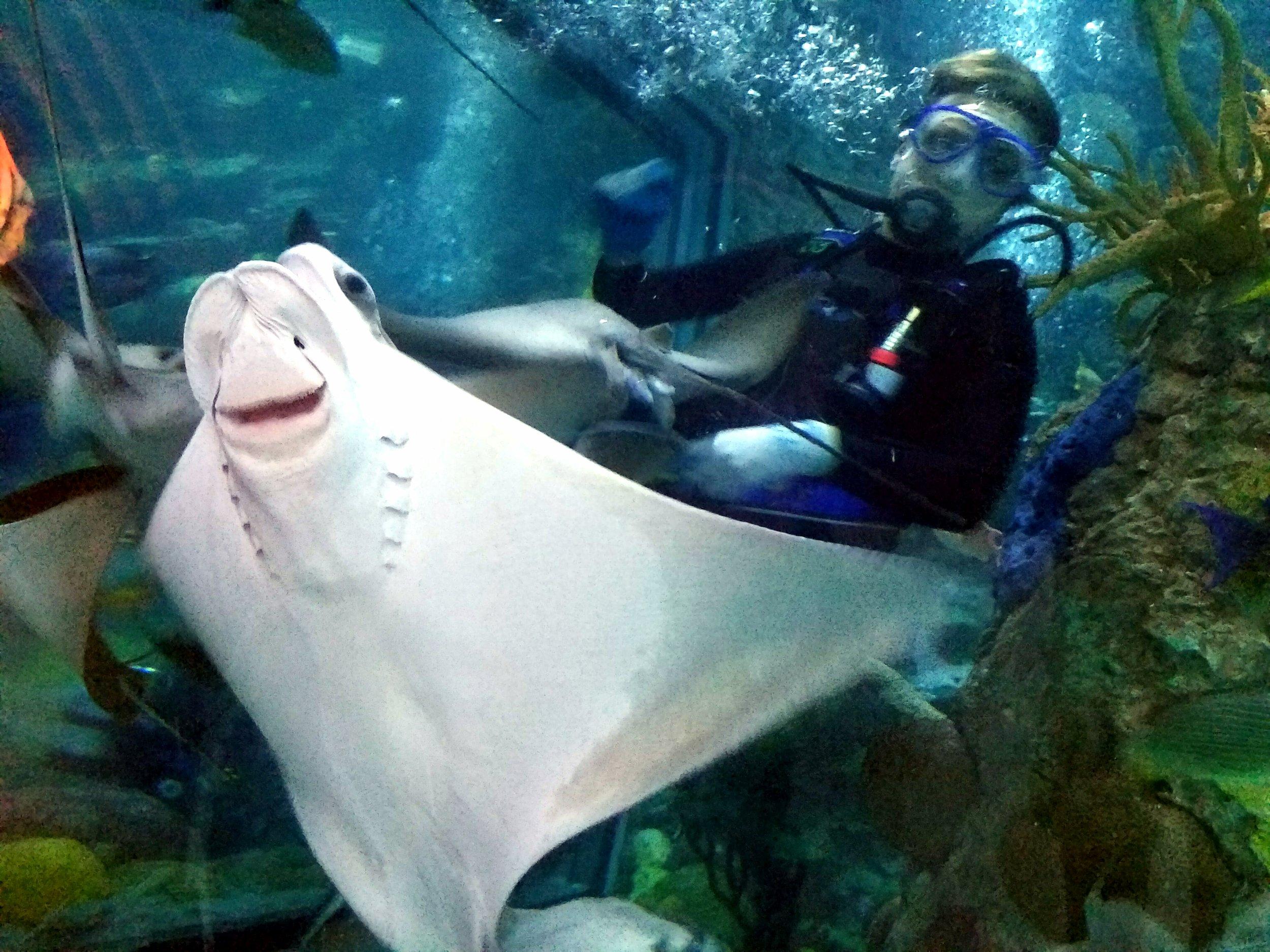 audubon-aquarium-stingray