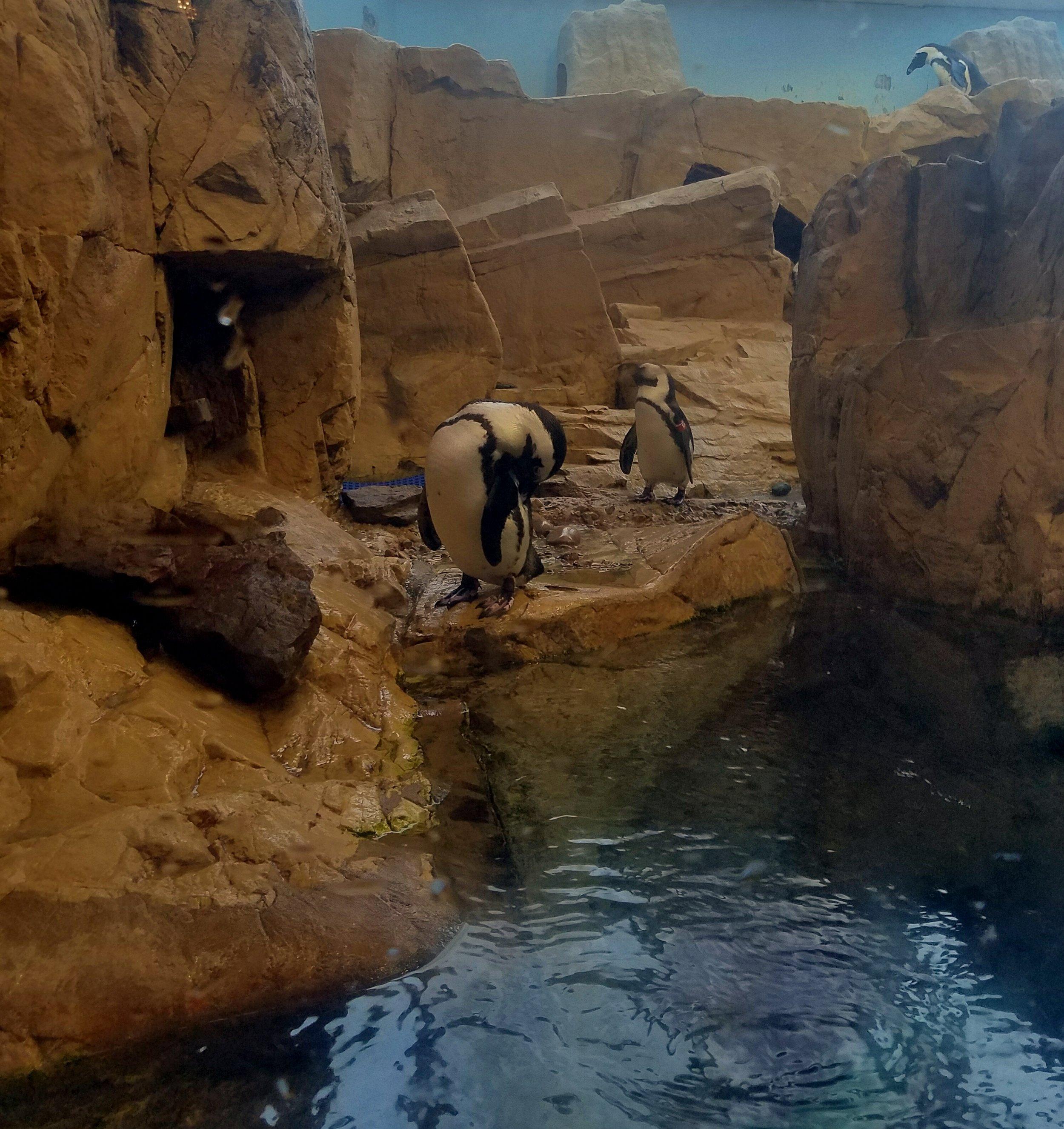 audubon-aquarium-new-orleans-penguin