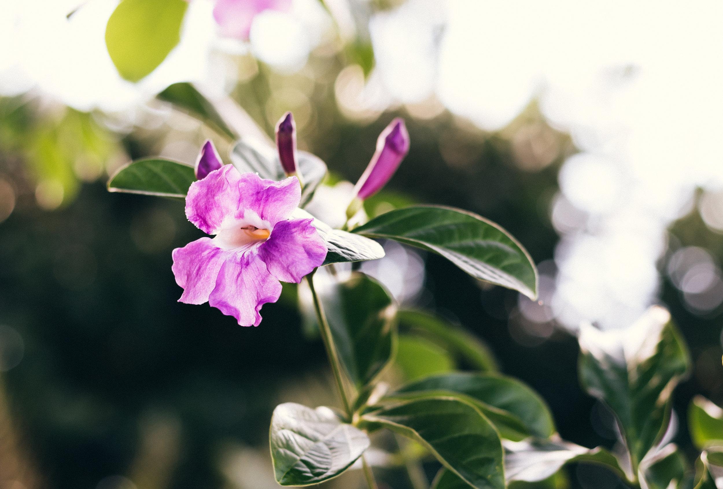 Edited Flowers in the Garden.jpg