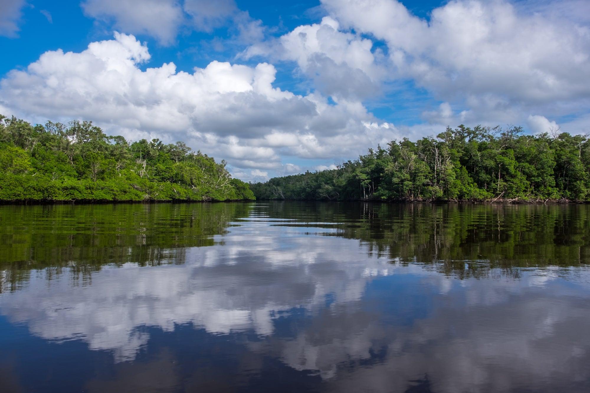Backwater reflections.