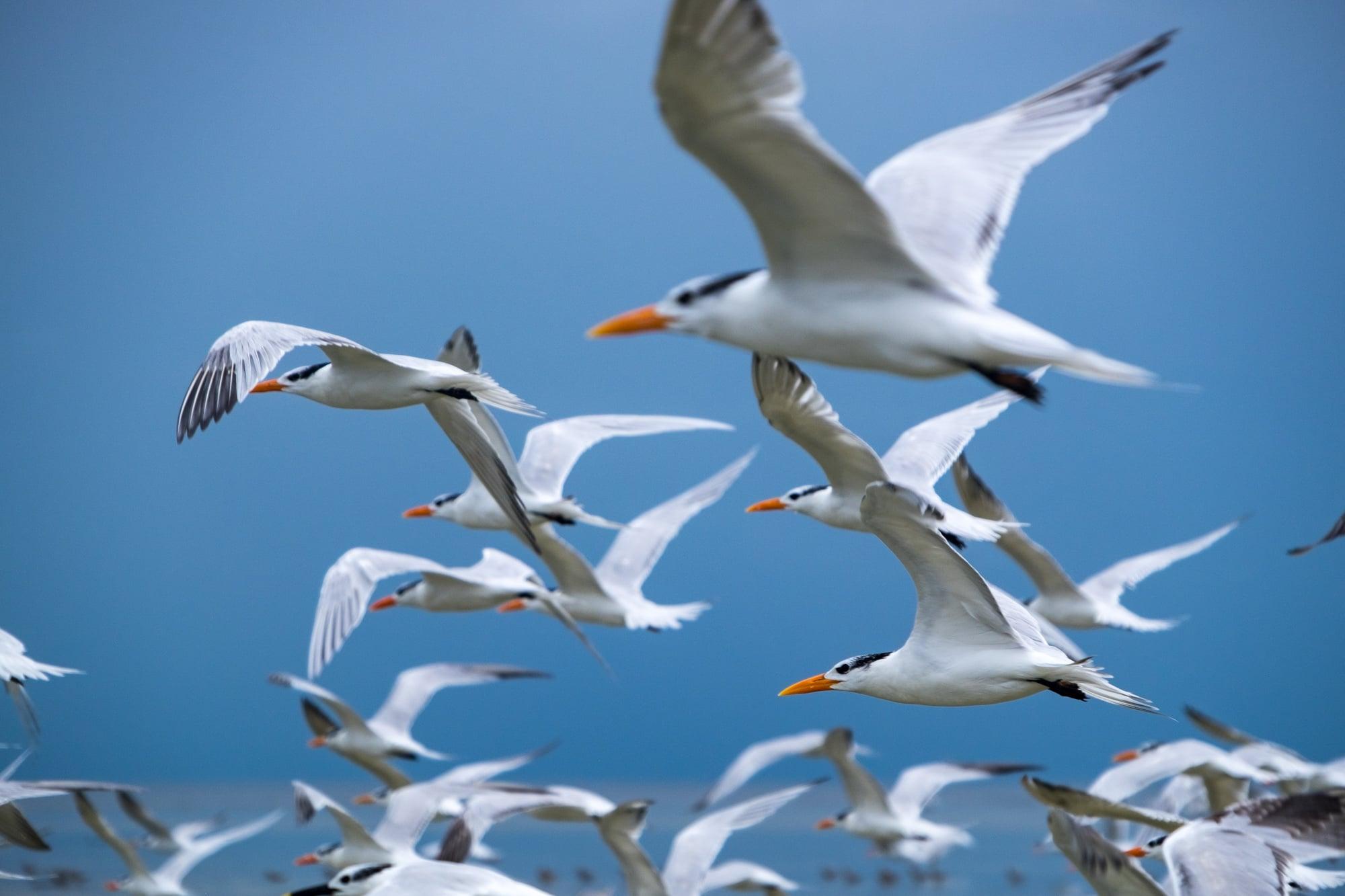 Beautiful image of birds in flight.