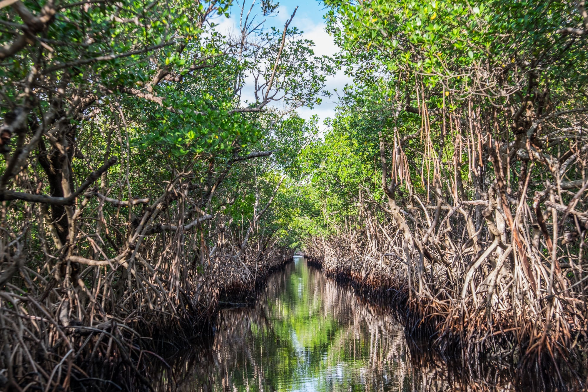 Mangrove airboat ride.
