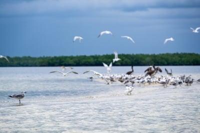 Wildlife at Everglades National Park | Credit: Stefanie Payne