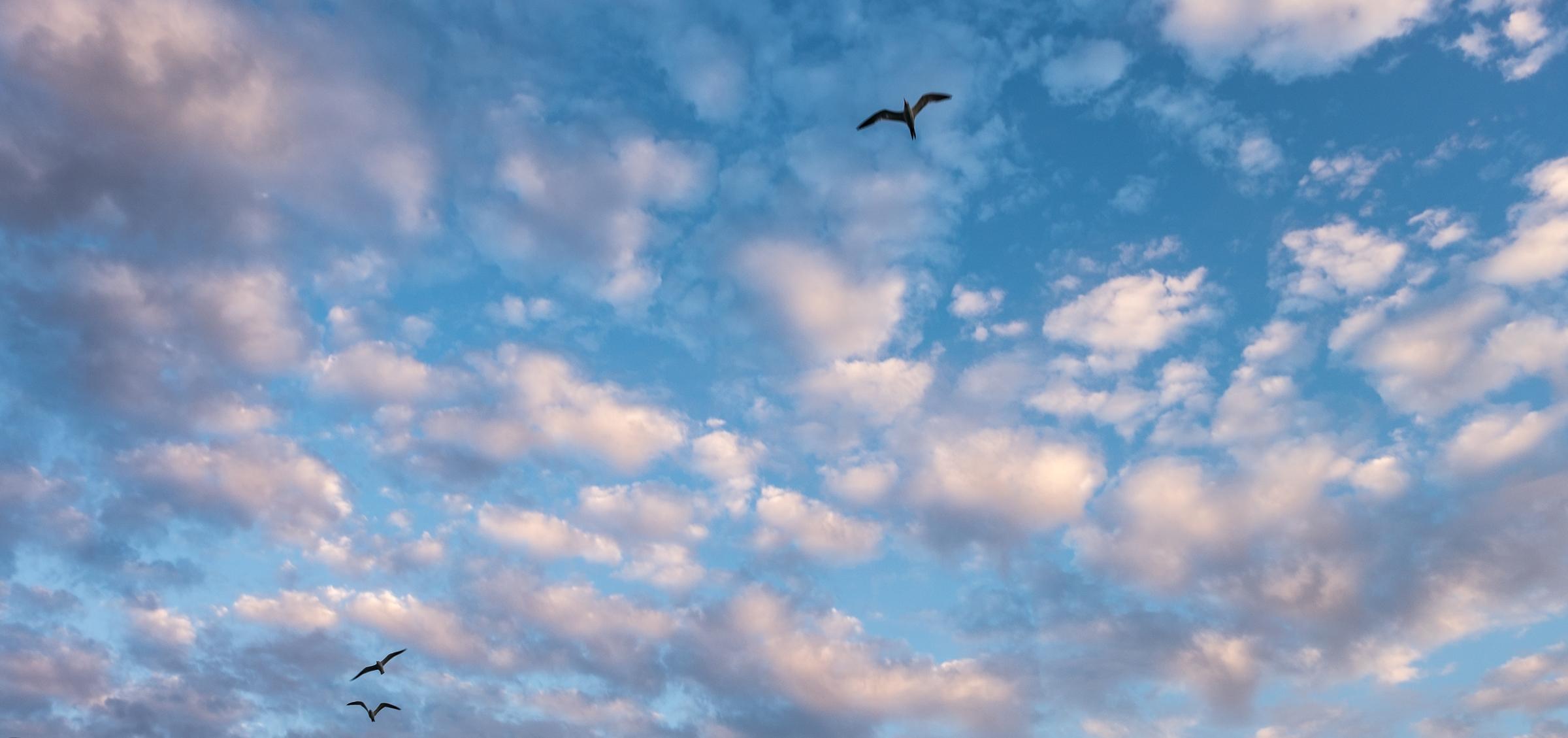 The ever-present birds follow us back to Miami Harbor.