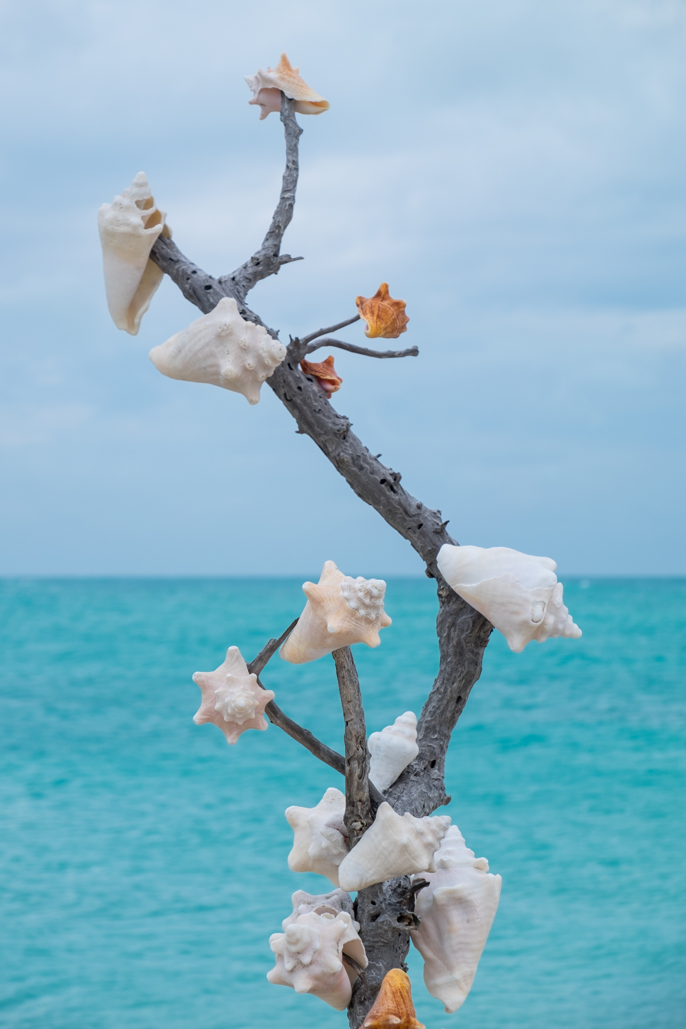 We found a tree adorned with conch shells.