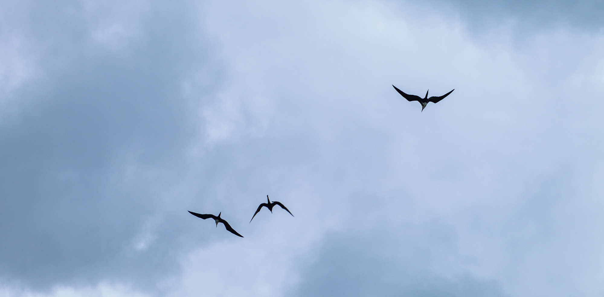 Aptly named Magnificent Frigatebirds soaring above.