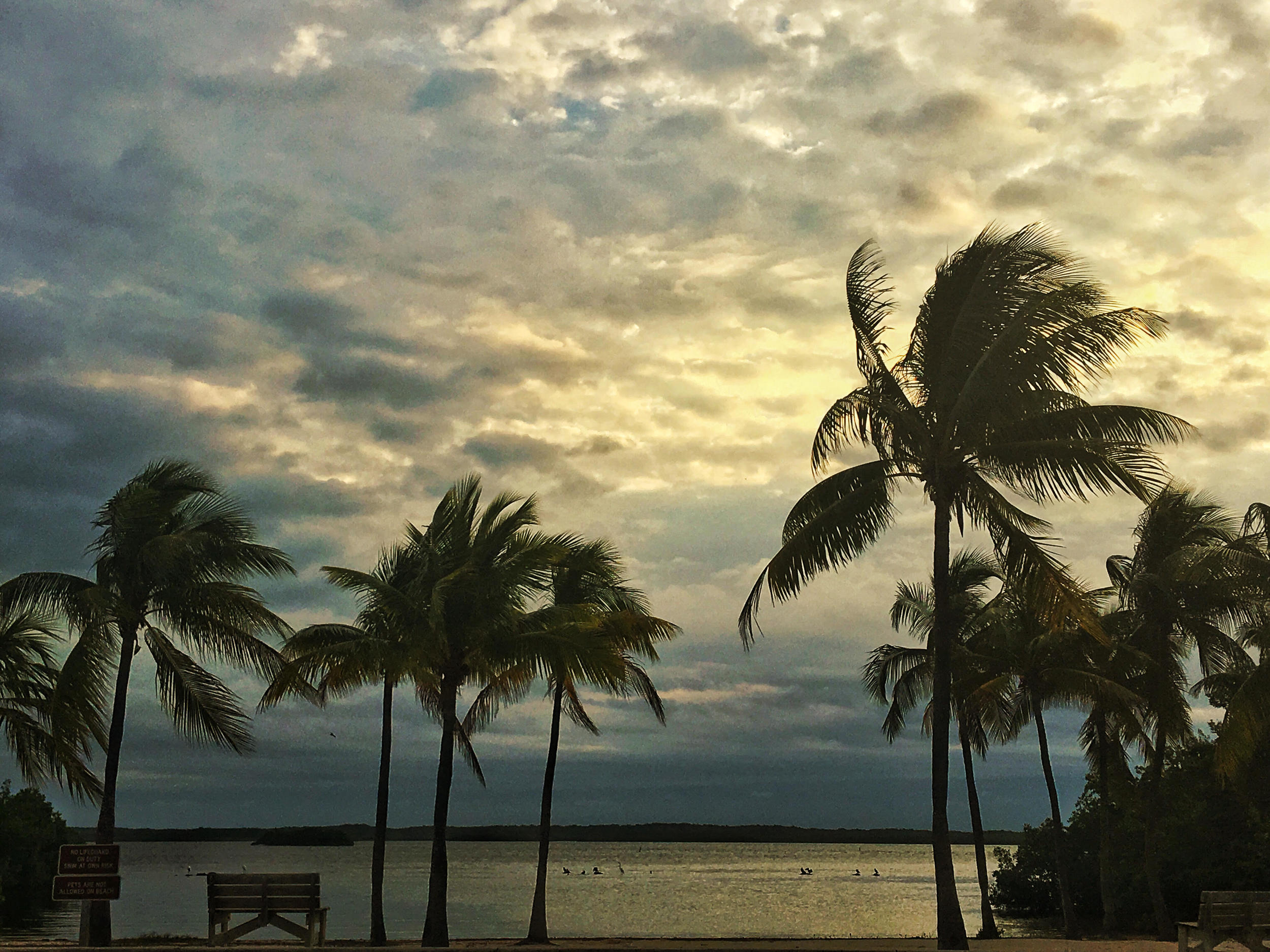 Palm trees at Biscayne National Park. Photo credit: Stefanie Payne