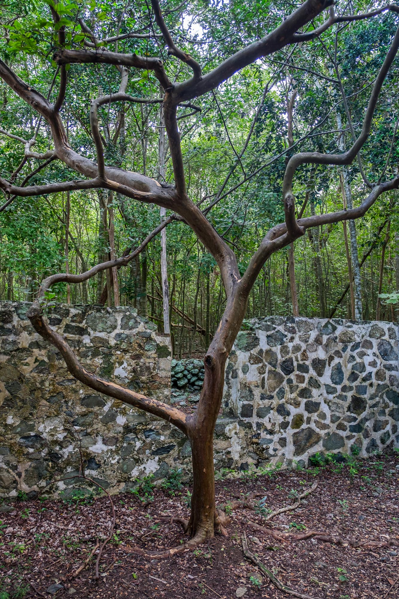 A cool tree growing in the ruins.