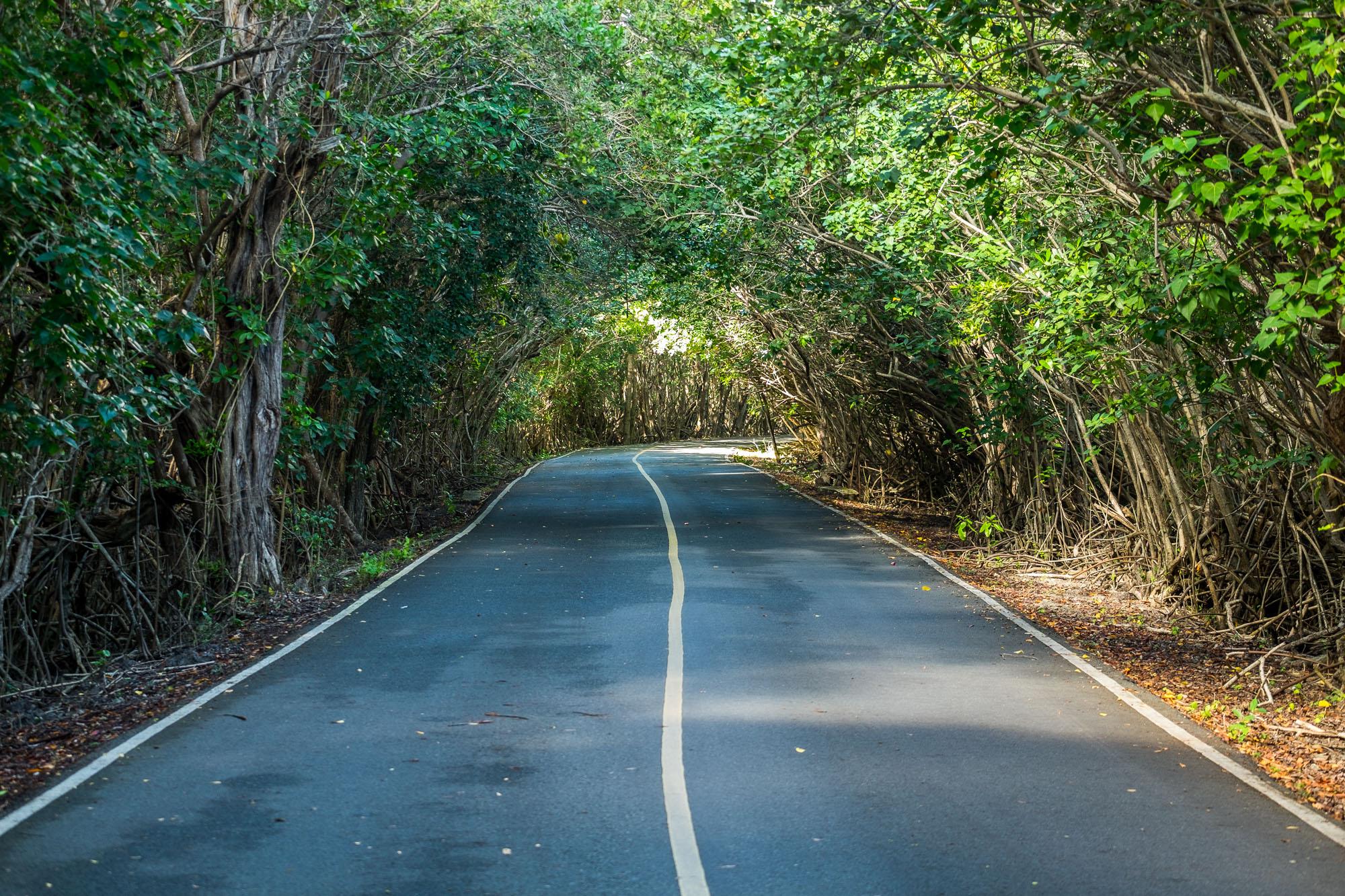 Driving along the coast, the road near the Annaberg Sugarmill ruins...