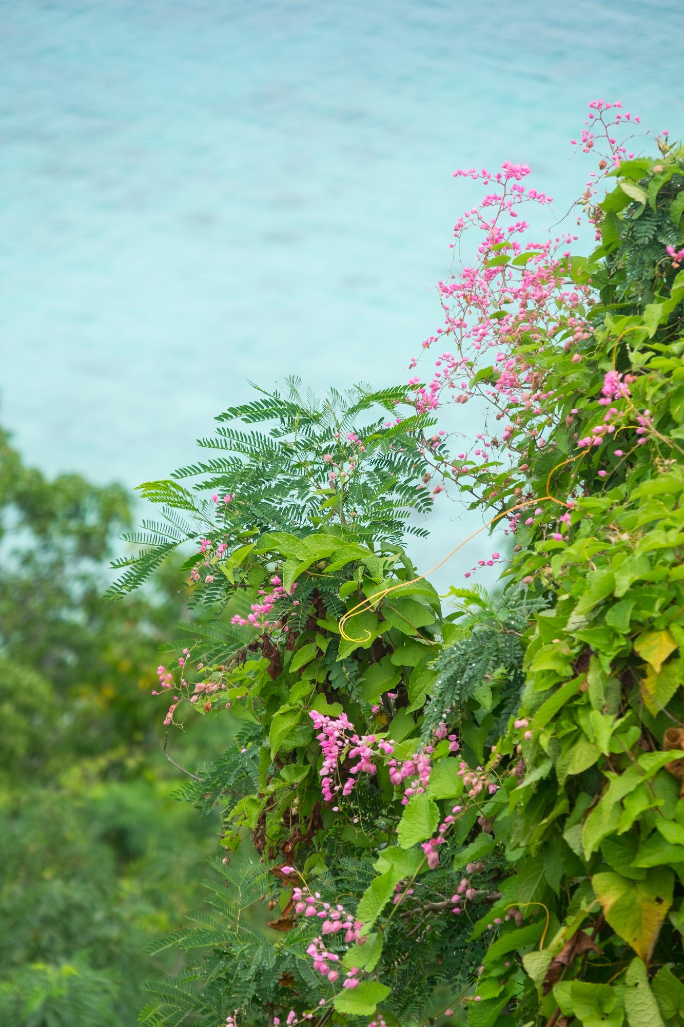 Pretty flowers against the aquamarine sea.