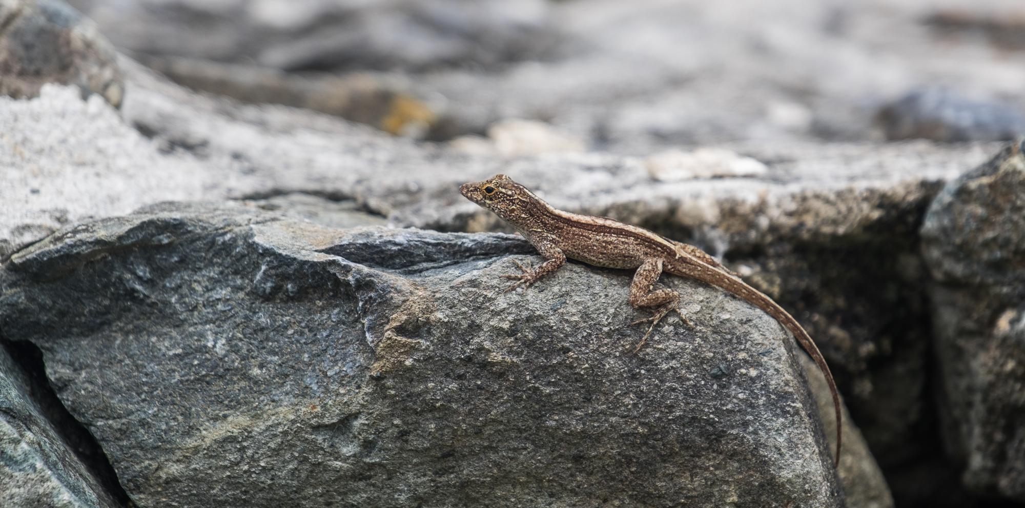 A cute little lizard.