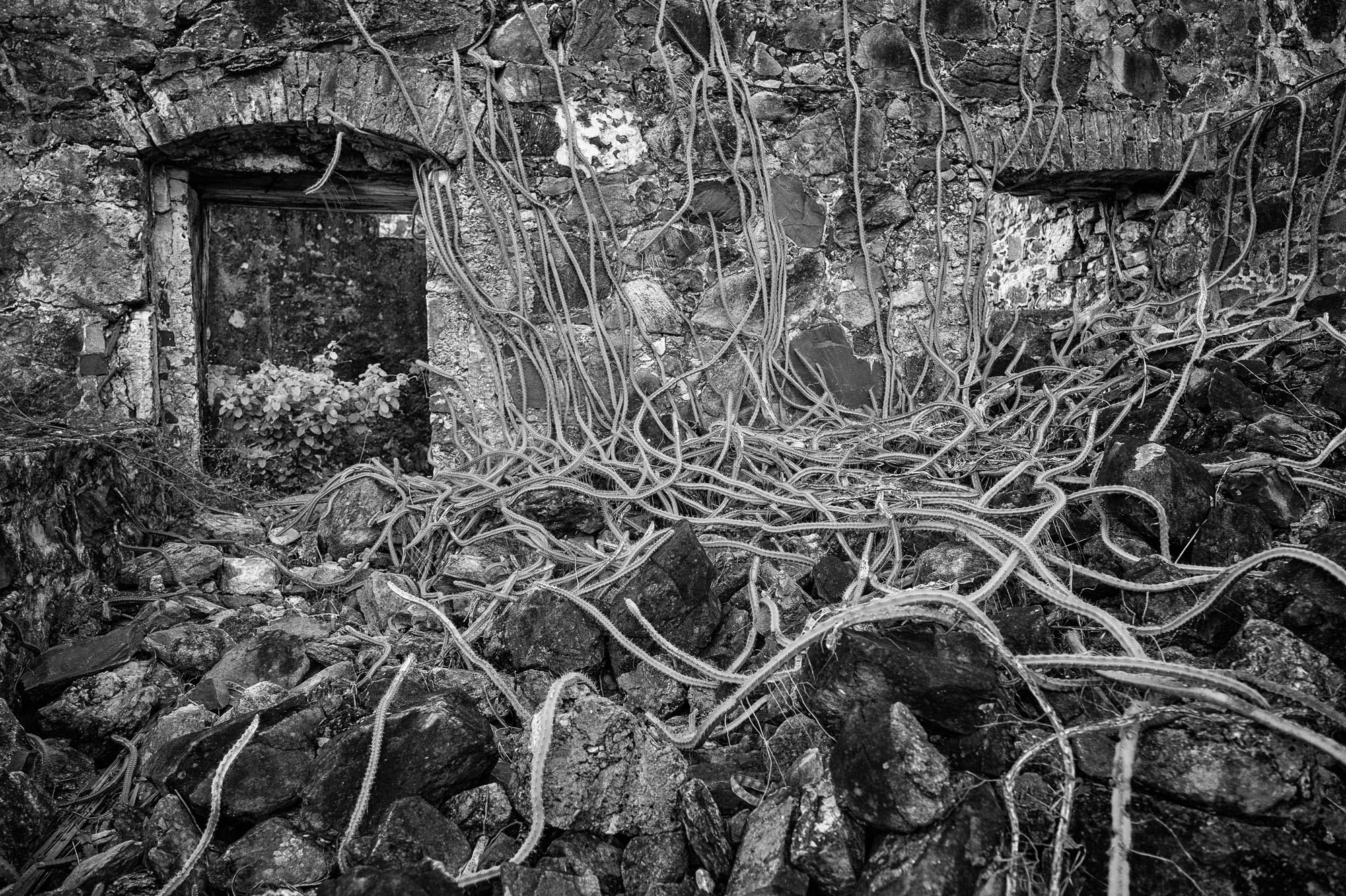 Old ruins and vines....fun to play in black and white.